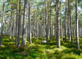 Forest Tree Improvement, Forest Genetic Resources