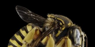 Honey bees' ability to fly can be damage by Pesticide