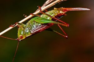 Factors responsible for abundance of insects