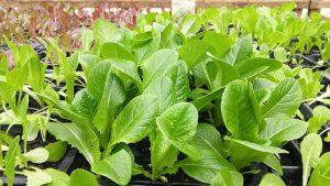 Sustainability through Organic Farming