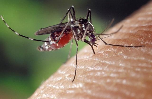 Preventing spread of dengue and zika virus through different stratigies
