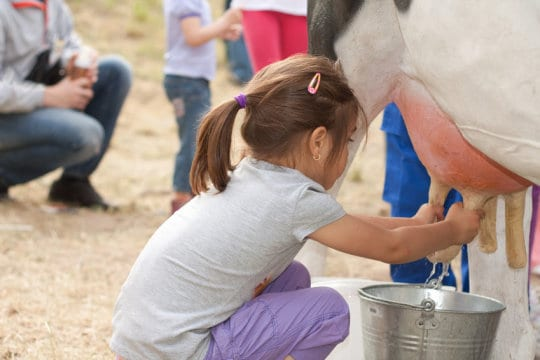 Farm children protect from asthma and Allergies by Cats and Cows