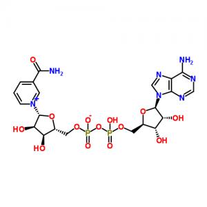 Nicotinamide Adenine dinucleotide (NAD+)