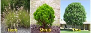 Herb, shrubs, and tree