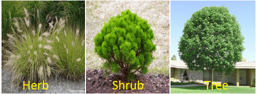 Types Classification of Plants with Examples and features