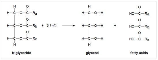 chemistry-of-fats-splitting Lipid definition, classification, functions and lipid profile