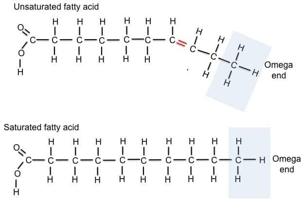 fatty-acid-figure Lipid definition, classification, functions and lipid profile
