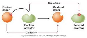 Oxydation Reduction Reaction