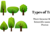 Types-of-Trees-100x70 Contact