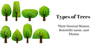 Different Types of Trees and their names