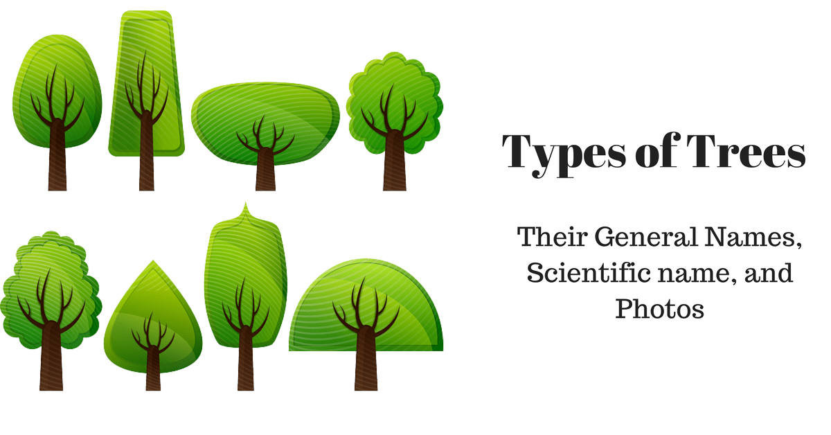 Diffe Types Of Trees And Their Names