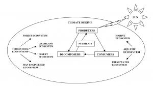 Biosphere energy flow